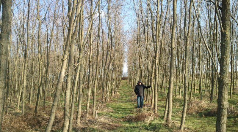 Tudomány és magánerdők