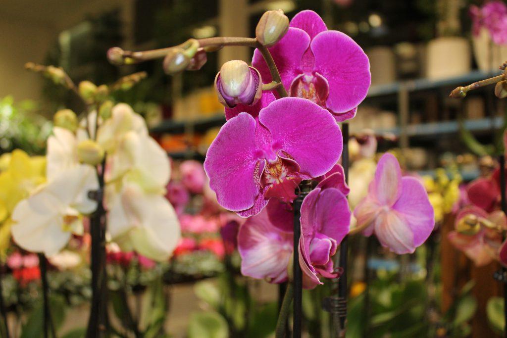 1647_5p_orchideak_viragok-5