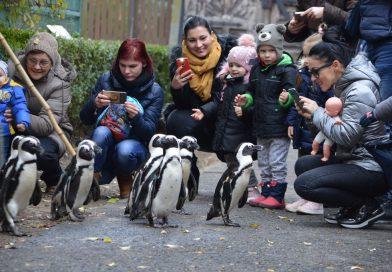 Séta a pingvinekkel