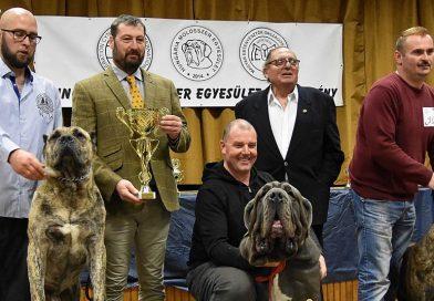 Évzáró kutyaszépségverseny