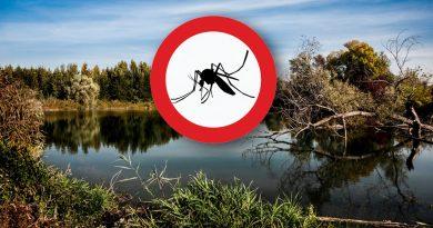 Bevetésen a szúnyogok ellen