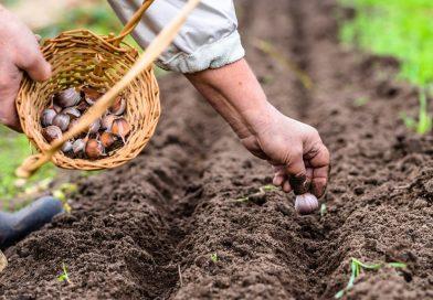 Házikertek korai zöldségféléi